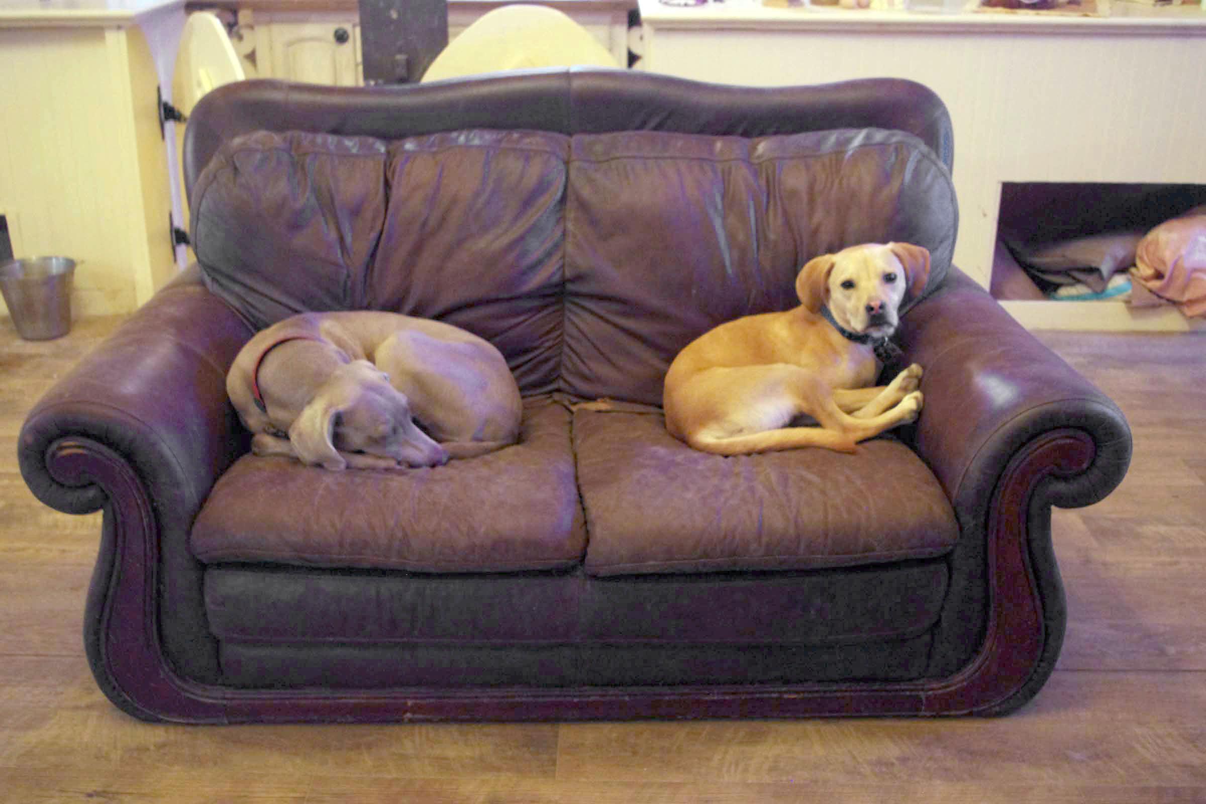 Wagadilly Cottage Dog Boarding U2013 Dog Boarding, Dog Training, Dog Psychology  U0026 Socialization